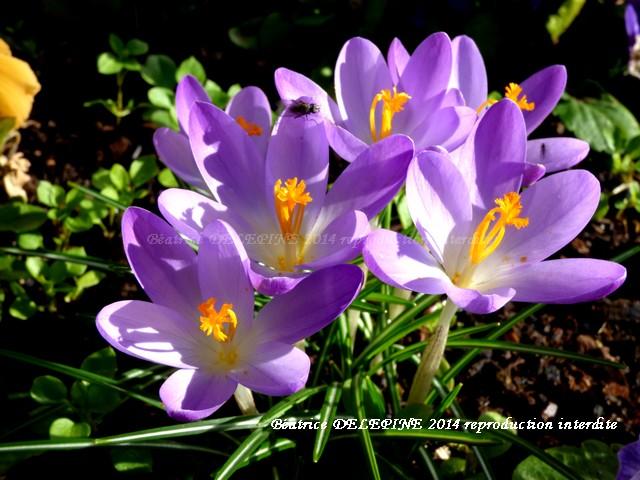 Un petit air de printemps en ce 17 février 2014